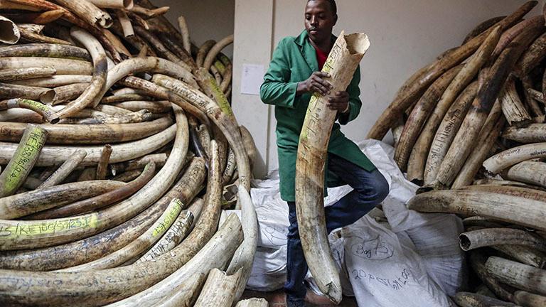 Botswana für Abschuss von Elefanten und Handel mit Elfenbein