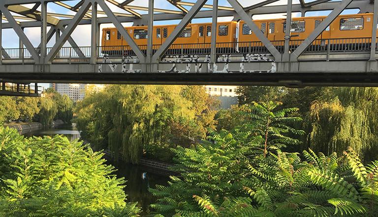 Berlin: Götterbäume im Vordergrund breiten sich zwischen dem Park am Gleisdreieck und dem Elise-Tilse-Park aus