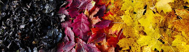 Blätter liegen auf dem Boden. Sie sind schwarz, rot und gelb gefärbt. Sie sind angeordnet wie die deutsche Flagge.
