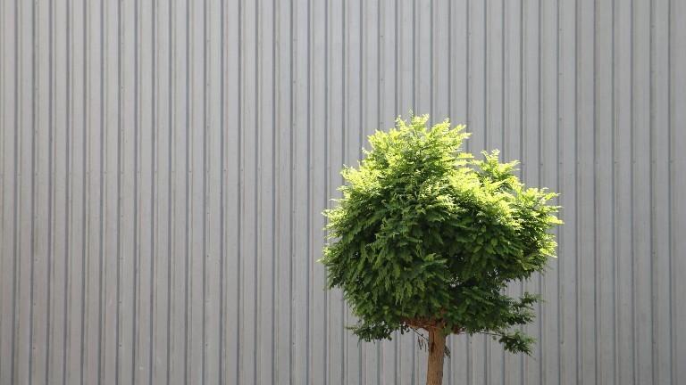 Ein Baum vor einer Wand von einem Gebäude