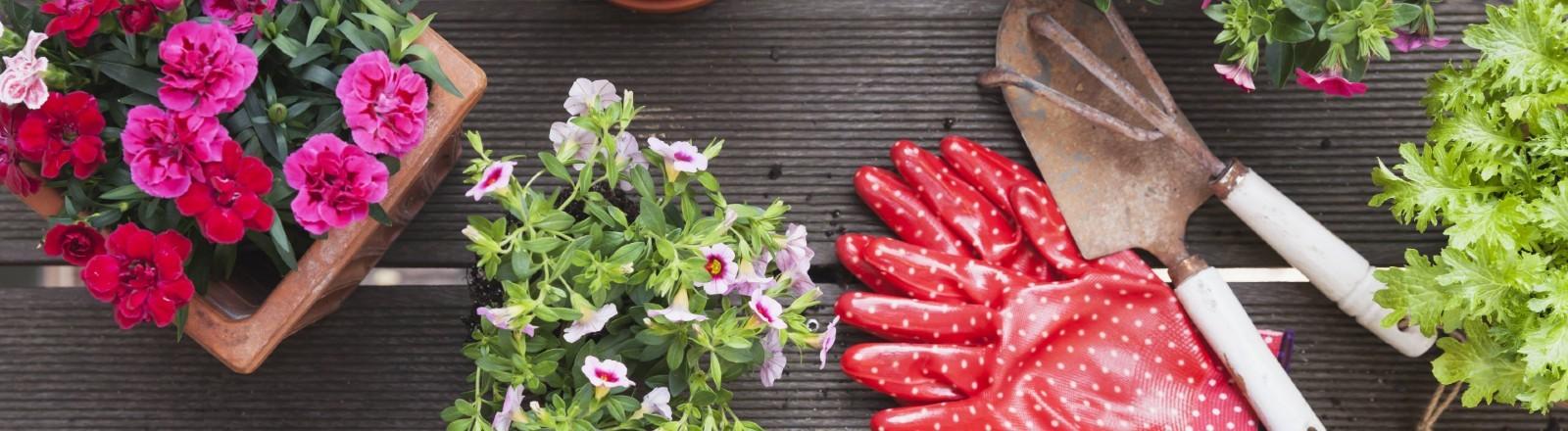 Blumen, Kräuter, Pflanzen, Werkzeug und rote Gartenhandschuhe auf einem Balkon.