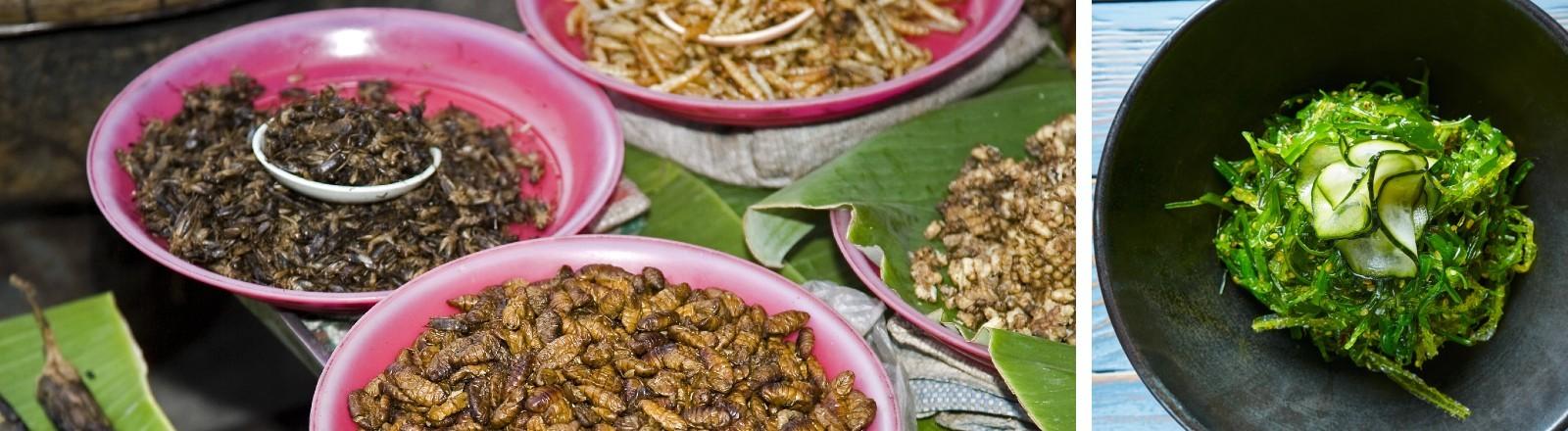 Teller voller verschiedener Insekten und ein Teller mit Algen.