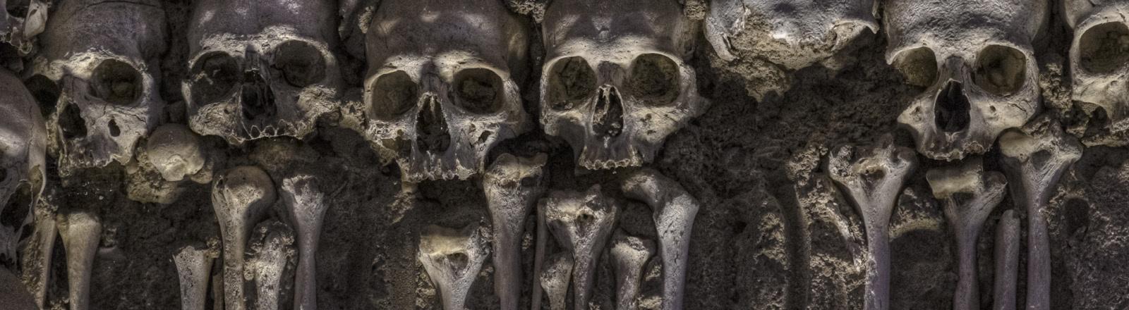 Aneinandergereihte Schädelknochen