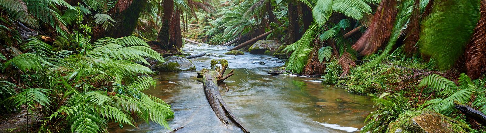 Ein Bach führt durch einen Dschungel.