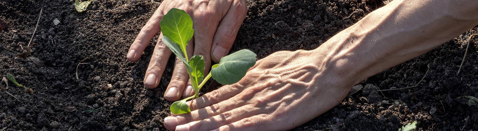 Ein Mann pflanzt eine Pflanze.