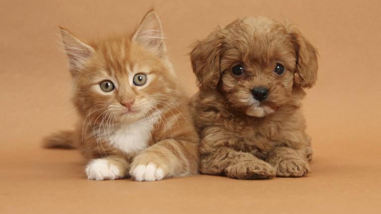 haustiere intelligenz bei hunden und katzen  und ihren