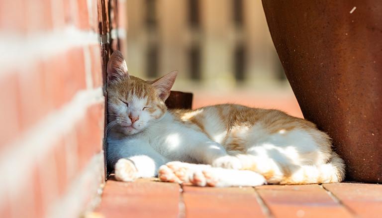 Haustieren bei Hitze helfen