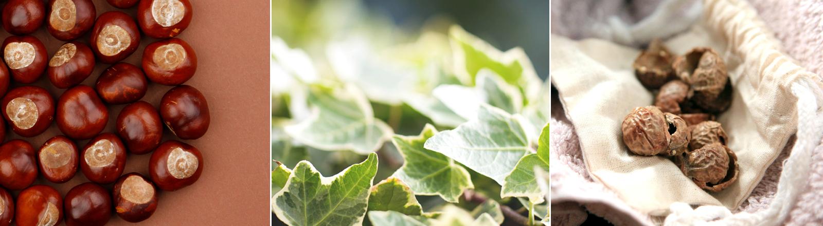 Kastanien, Efeu und Waschnüsse als Alternativen zu Biowaschmittel.