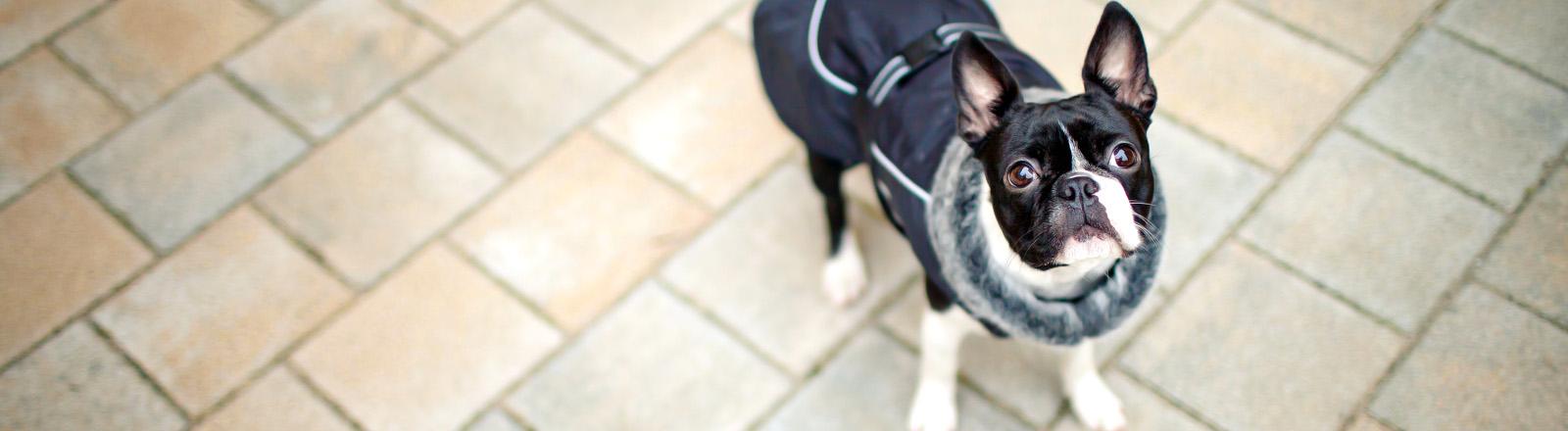 Hunde mit Mantel