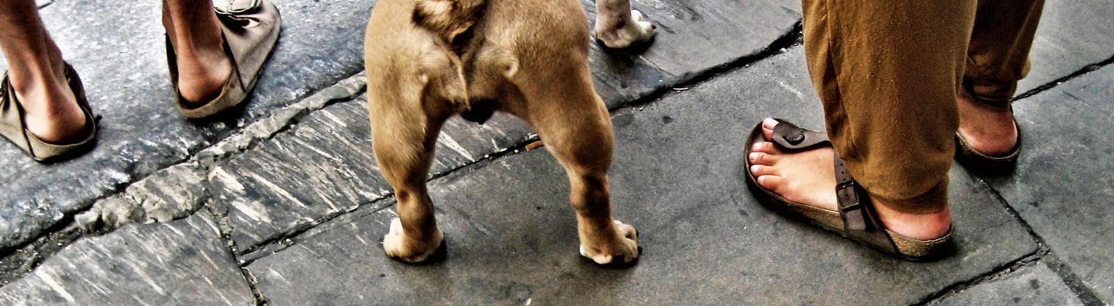 Spaziergänger mit Sandalen von Birkenstock