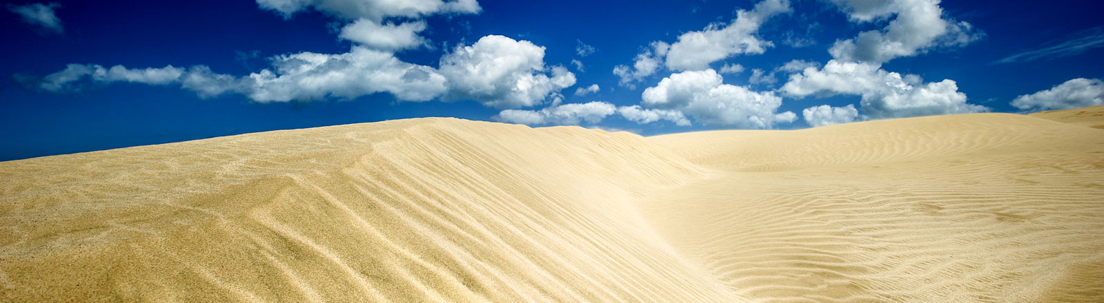 Eine Sanddüne in der Wüste
