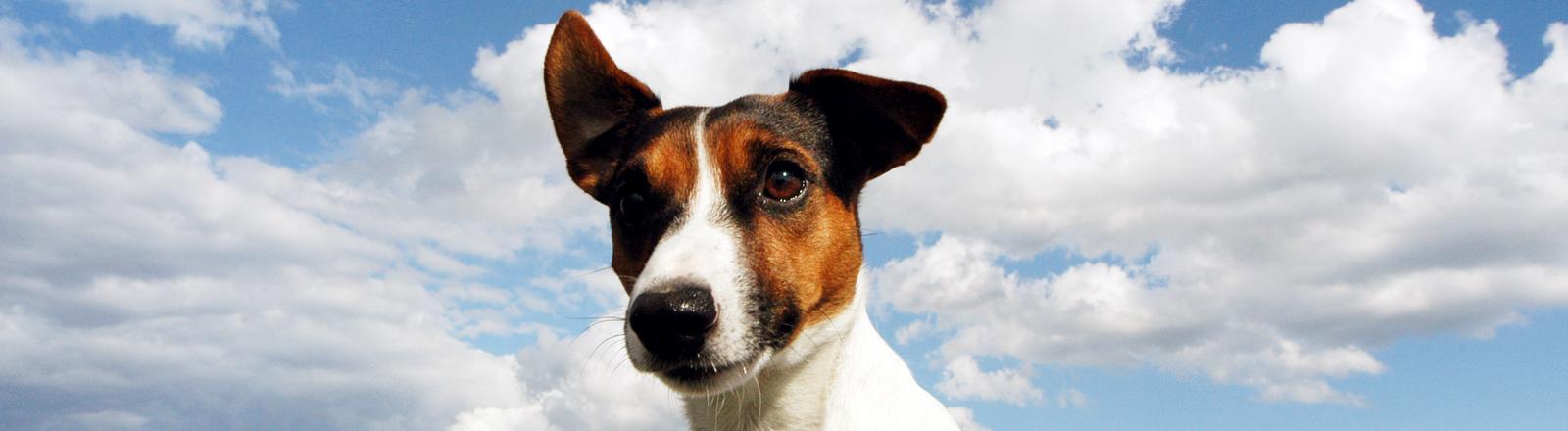 Hunde vor blauem Himmel und Wolken.