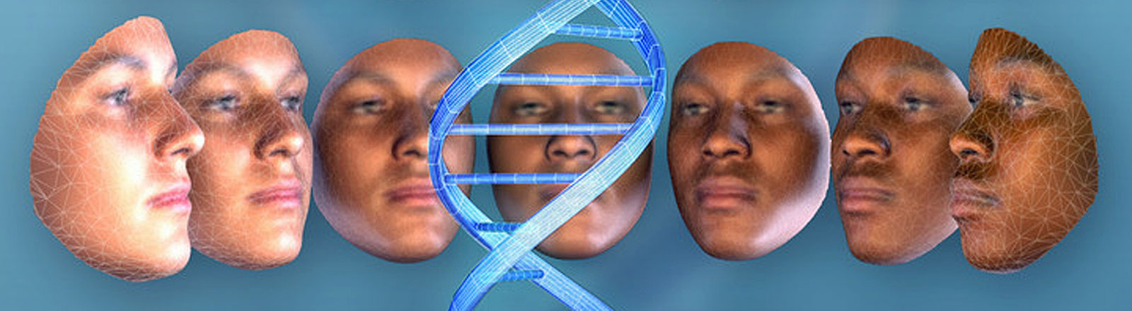 Images of faces showing the range of variation for both sex and ancestry with European on the left, African on the right, male at the top and female at the bottom, shown with DNA strand.