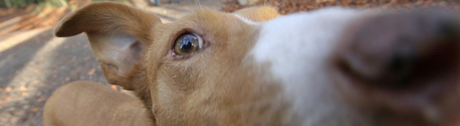 Ein Hund schaut in eine Kamera.