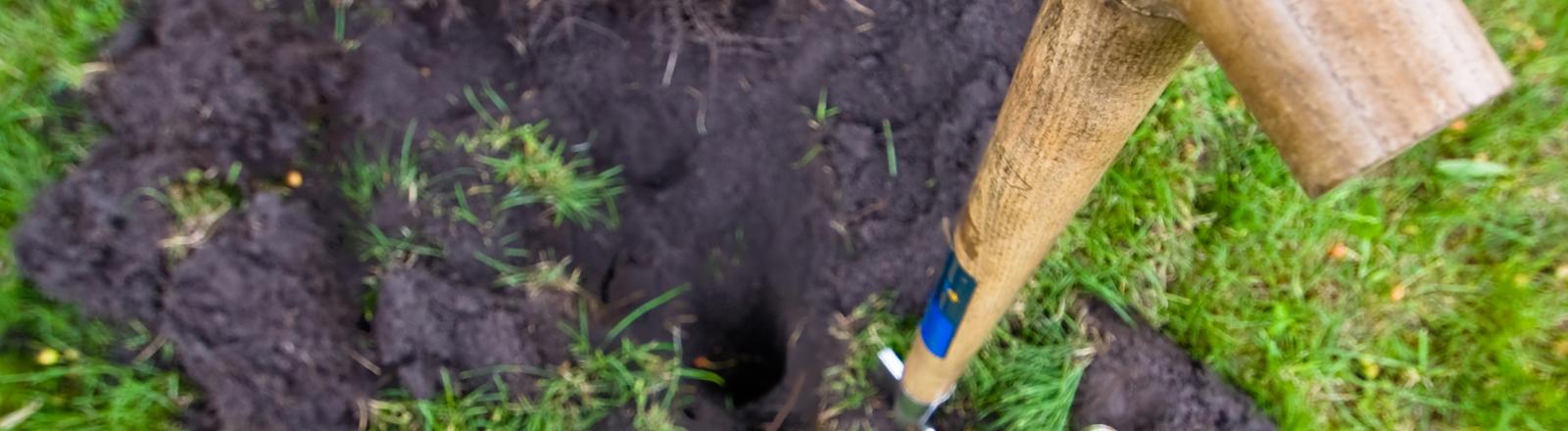Ein Spaten steckt in einer grünen Wiese, wo gerade umgegraben wird.