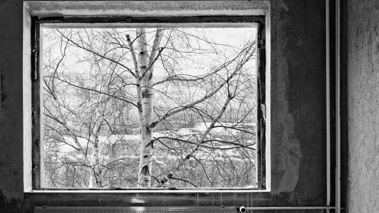 Blick aus dem Fenster auf eine Birke
