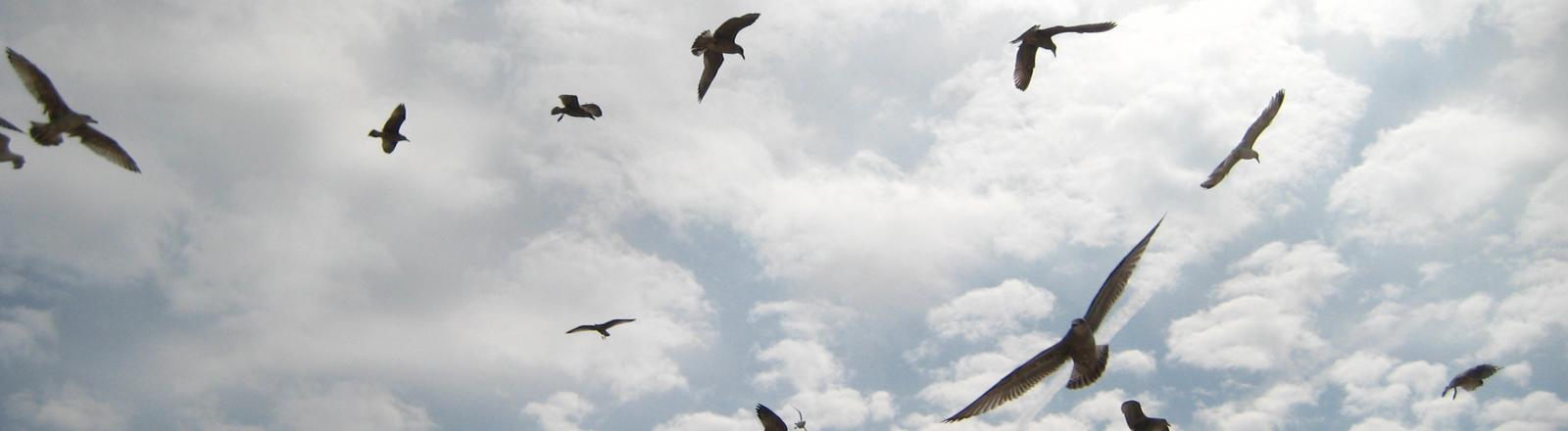 Vögel fliegen in der Luft