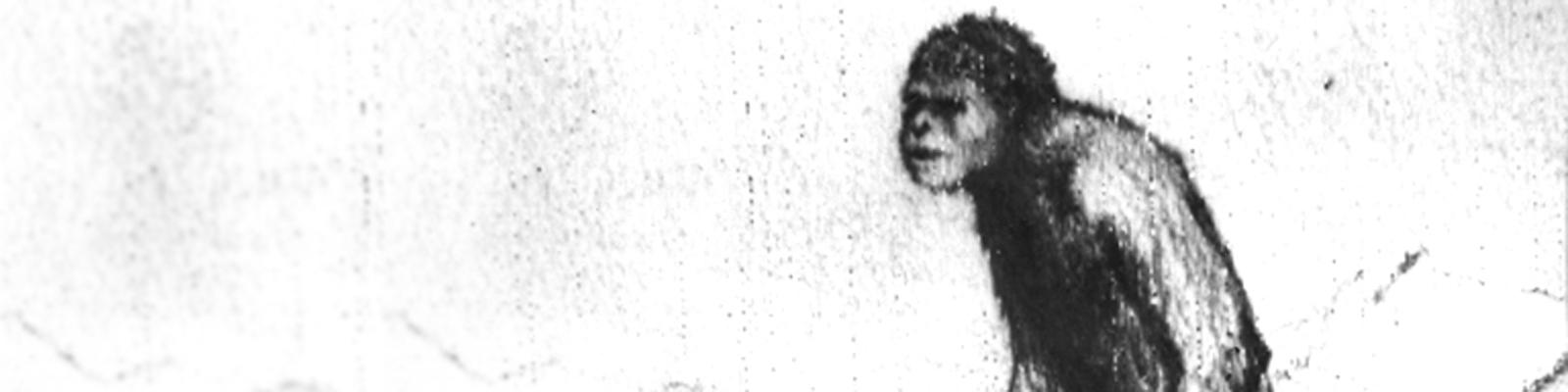 """Der sowjetische Wissenschaftler A.G. Pronin zeichnete diese Skizze eines affenähnlichen Wesens, daß seiner Ansicht nach den Schneemenschen """"Yeti"""" darstellt. Er will den Yeti zweimal gesehen haben."""
