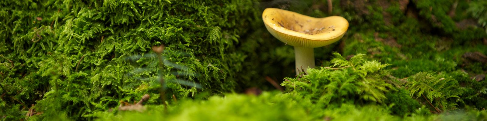 Baum und Pilz kommunizieren über den Boden.