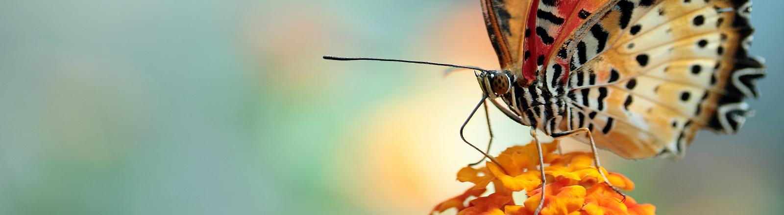 Ein Schmetterling sitzt entspannt auf einer Blume.