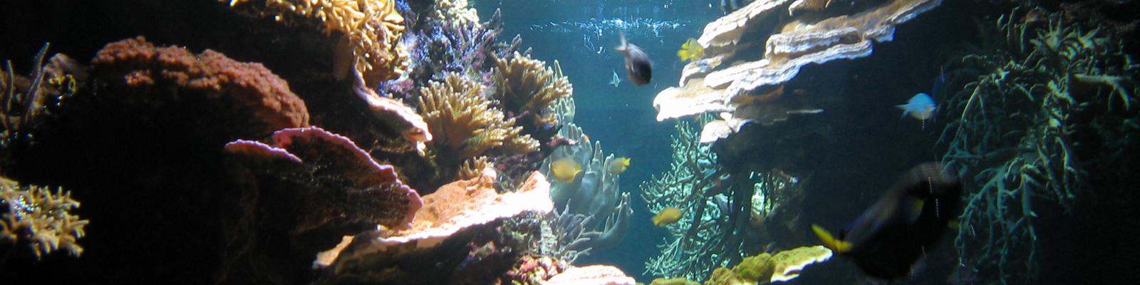 Im Ozean vor der Ostküste der USA zwischen North Carolina und dem Golf von Maine tritt vermehrt Methan-Gas aus, dass die Unterwasserflora und- -fauna schädigt.