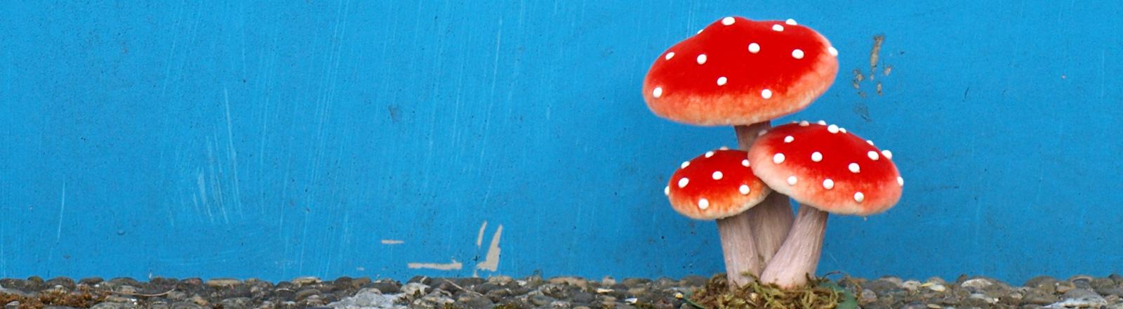 Vor einer blau gestrichenen Wand steht ein künstlicher Fliegenpilz.