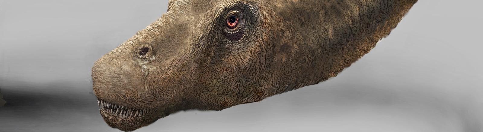 Illustration des Dreadnoughtus schrani; Bild: Mark A. Klingler / Carnegie Museum of Natural History / dpa
