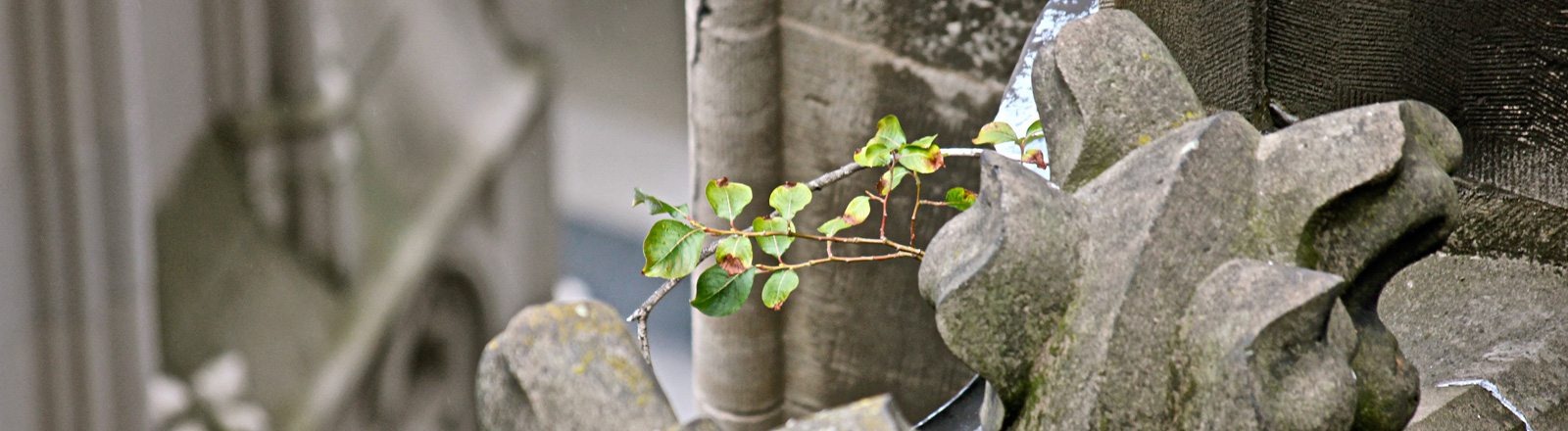 Blick auf eine Figur am Dom von oben. Seitlich wächst ein kleiner Baum.