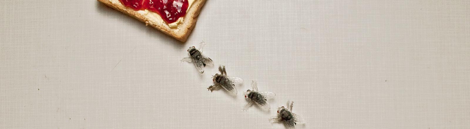 Vier Fliegen, aus Gummi, laufen Richtung eines Toastbrotes auf dem Butter und Marmelade ist.