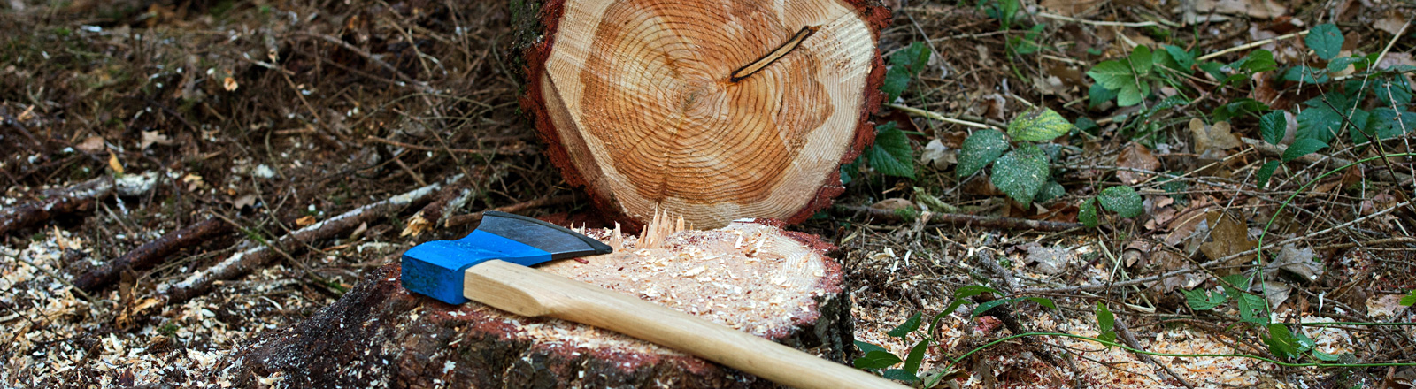 Eine Axt liegt auf einem zuvor gefällten Fichtenstamm; Bild: dpa