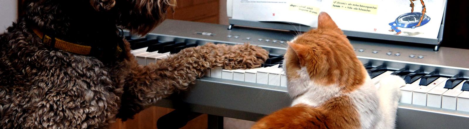 """Katze spielt in der Wittlicher """"Tierakademie"""" mit Hund Klavier."""