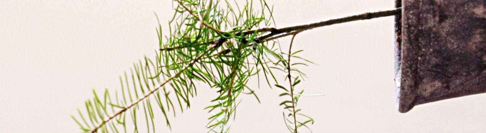 Eine Topfpflanze wächst waagerecht aus ihrem Topf heraus.