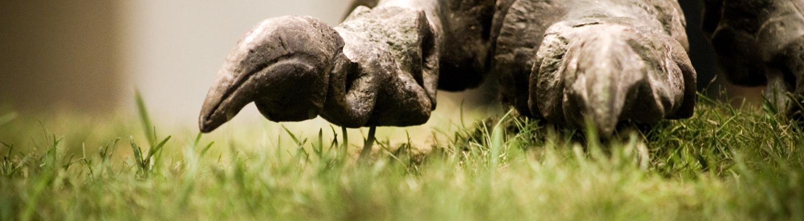 Dino-Fuß
