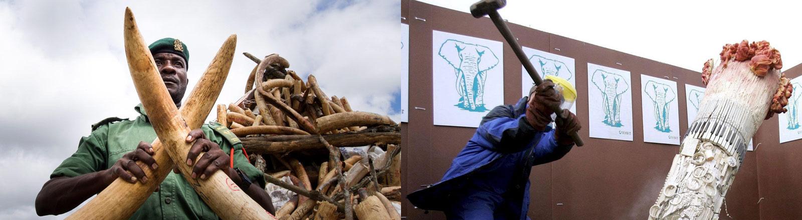 Ein afrikanischer Offizieller mit Elfenbein in der Hand und eine Protestaktion von Umweltschützern in New York.
