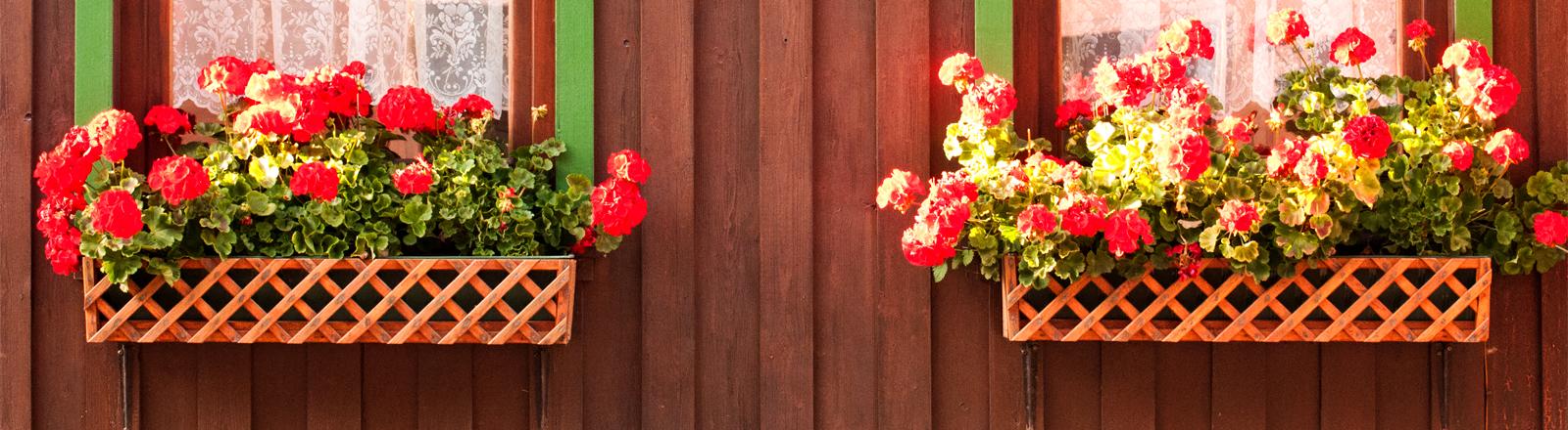 Rustikale Blumenkästen vor einer Holzwand