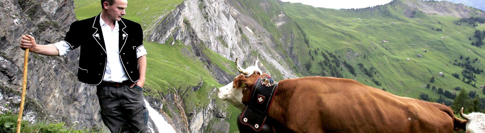 Ein Senner mit einer Kuhherde in den Schweizer Alpen.