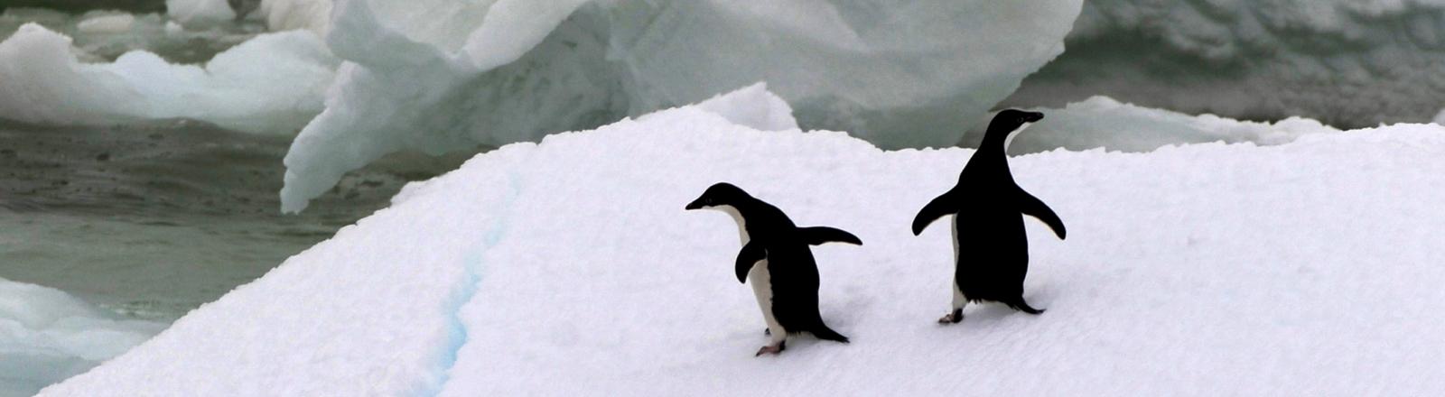 Zwei Pinguine gehen in unterschiedliche Richtungen