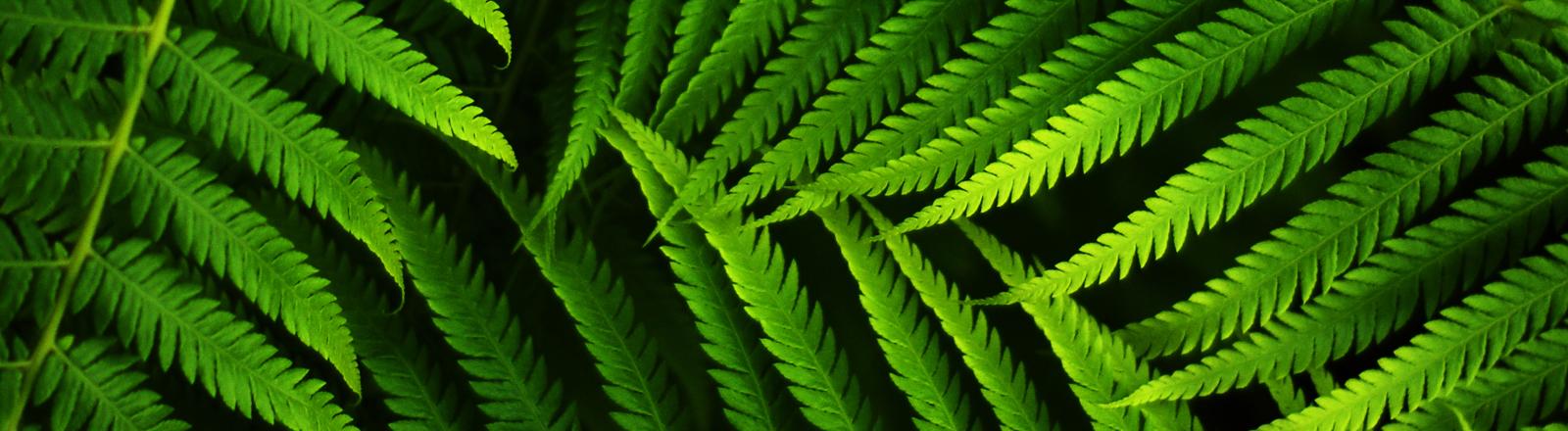 Nahaufnahme von Blättern im Dschungel.