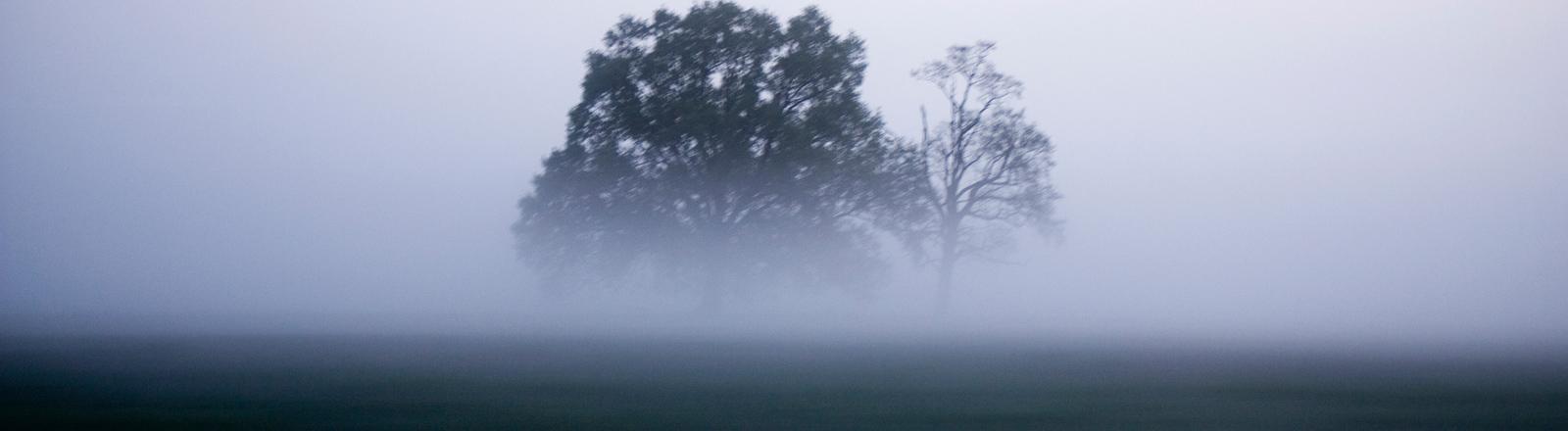 Dicke Nebelschwaden auf einer Wiese verschlucken einen Baum.