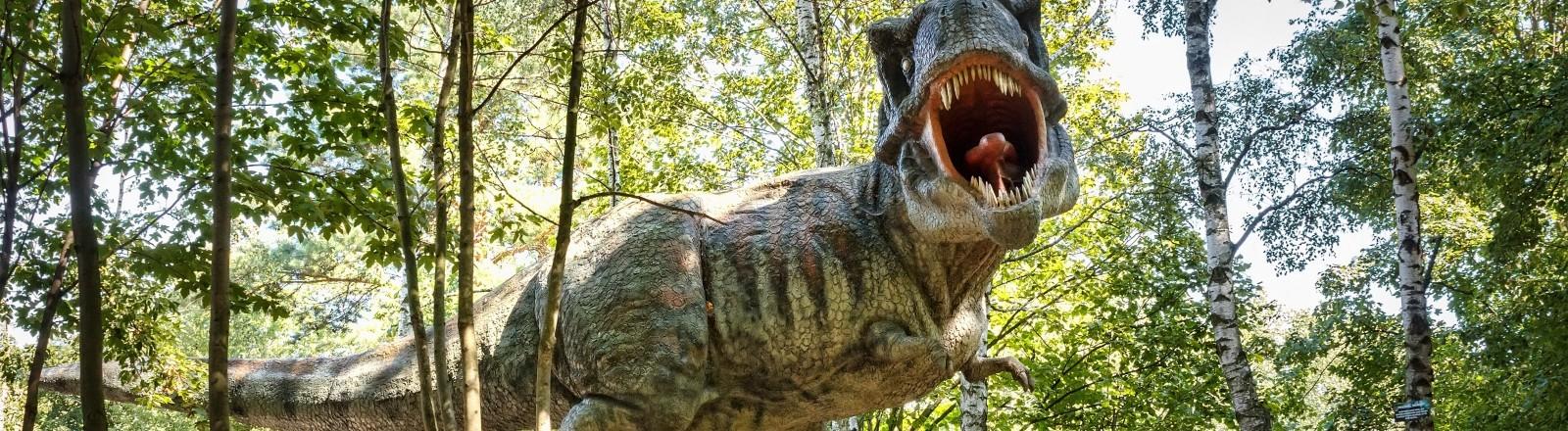 Das Modell eines Tyrannosaurus rex.