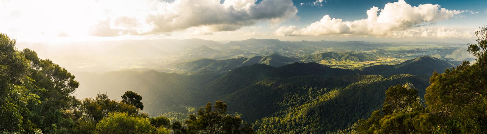 Gondwana Regenwald.