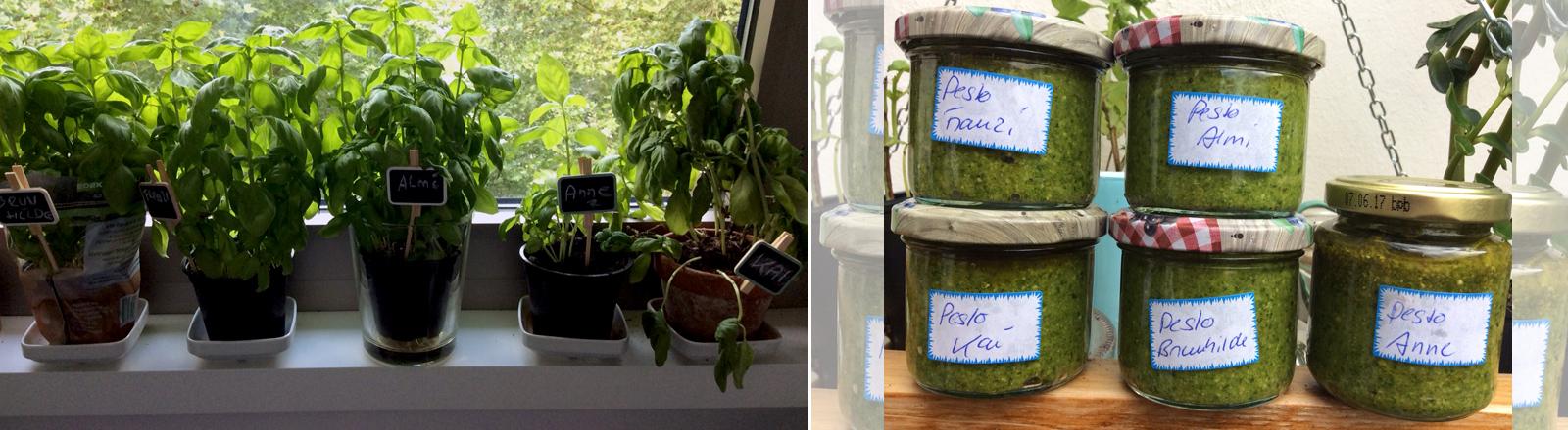 Der Basilikum-Test von Almuth mit dem Endprodukt Pesto