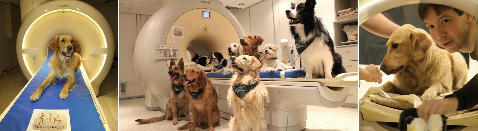 Sprachverständnis von Hunden wird im Kernspintomografen untersucht.