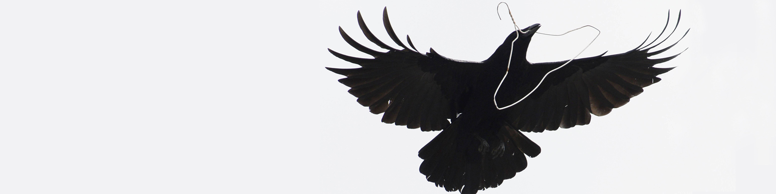 Eine Krähe mit einem Kleiderbügel.