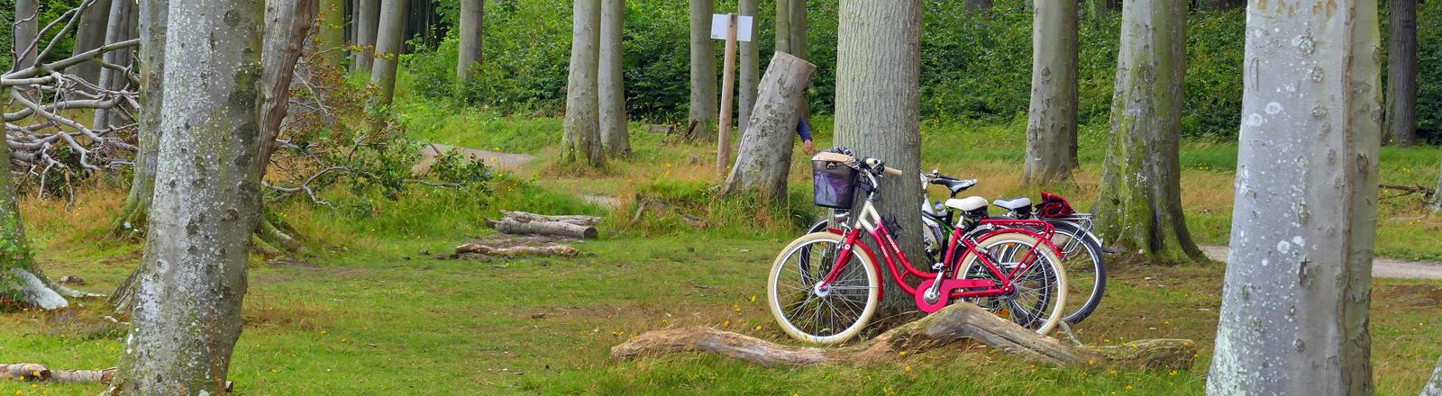 Fahrräder von Jugendlichen stehen in einem Wald in Mecklenburg-Vorpommern. Zu sehen sind Rotbuchen.
