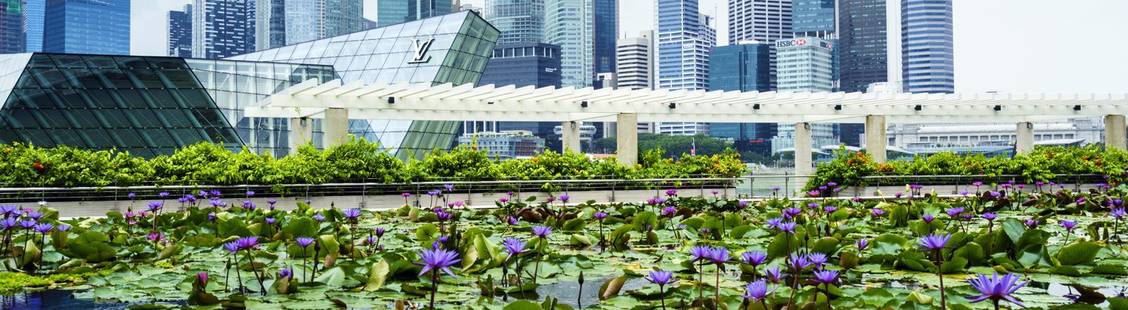 Ein Seerosenteich vor der Skyline von Singapur.
