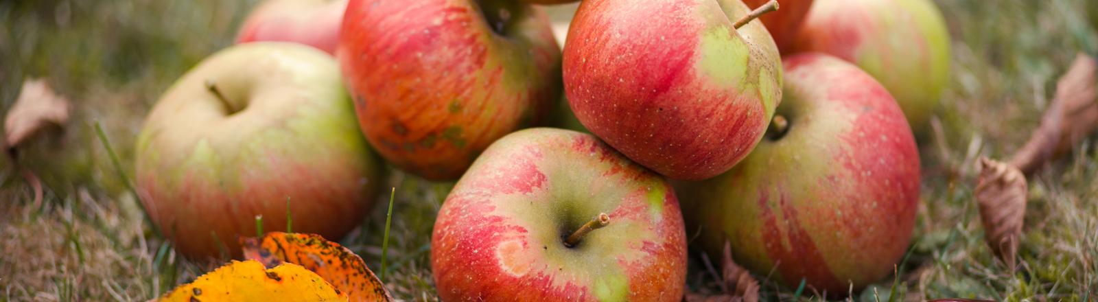 Äpfel auf einer Wiese.