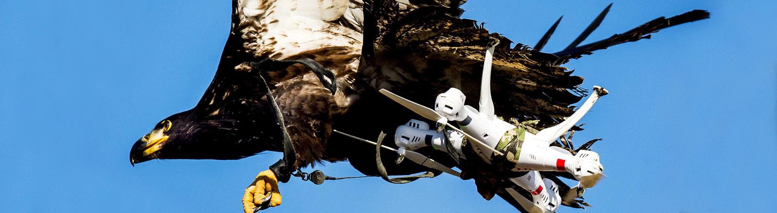 Ein Adler holt eine Drohne aus der Luft.