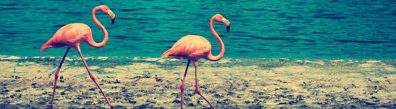 Flamingos am Strand.