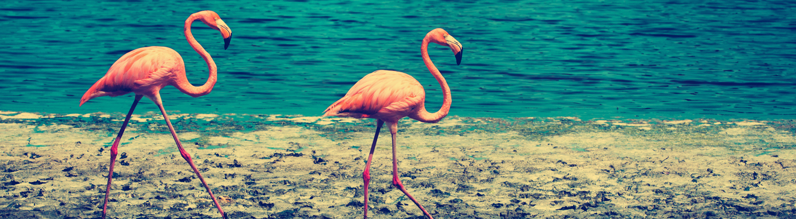 Flamingos am Strand.